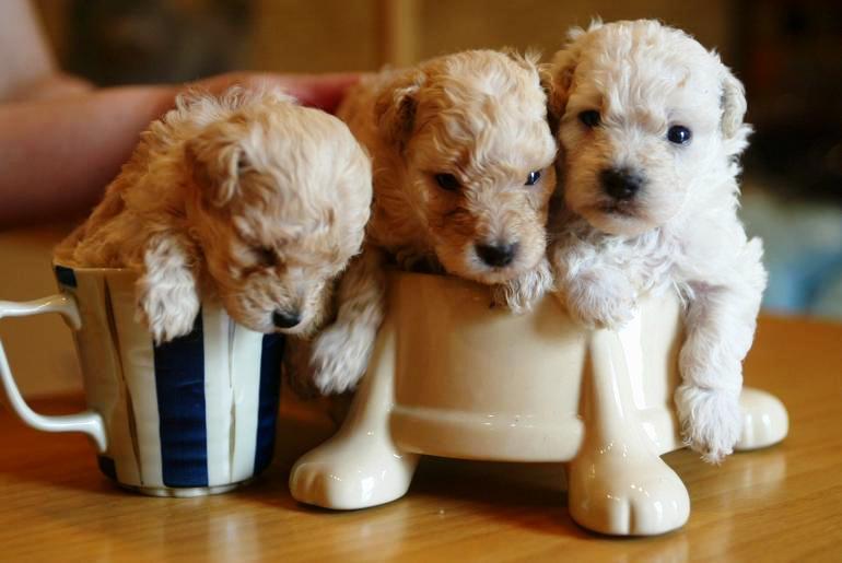 20 cachorros pequeños 18