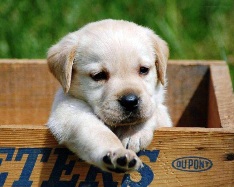 20 cachorros pequeños 27