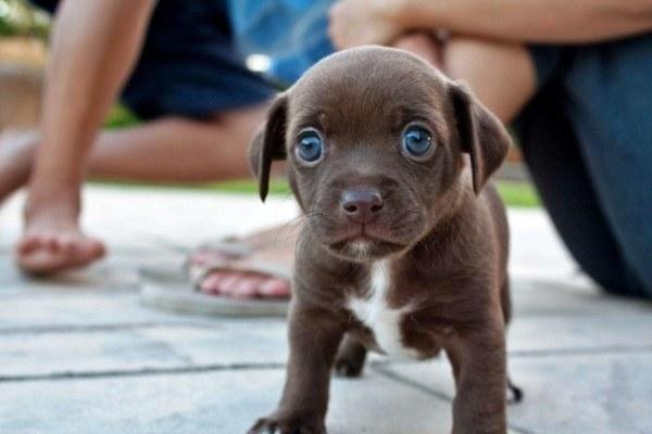 20 cachorros pequeños 3