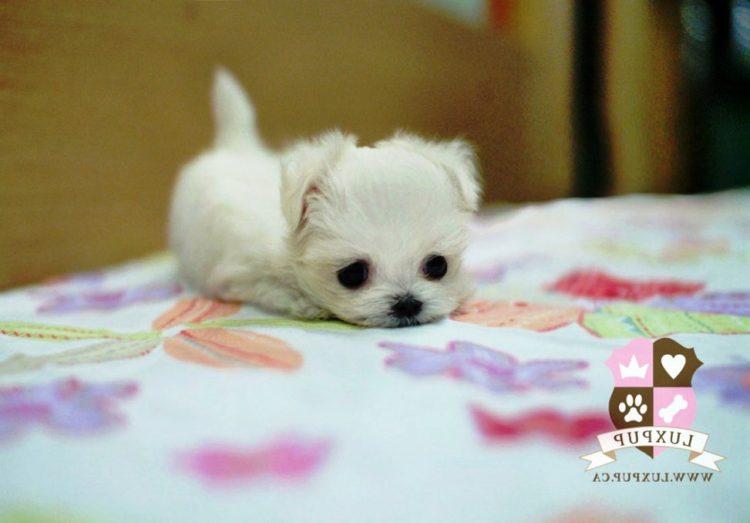 20 cachorros pequeños 34