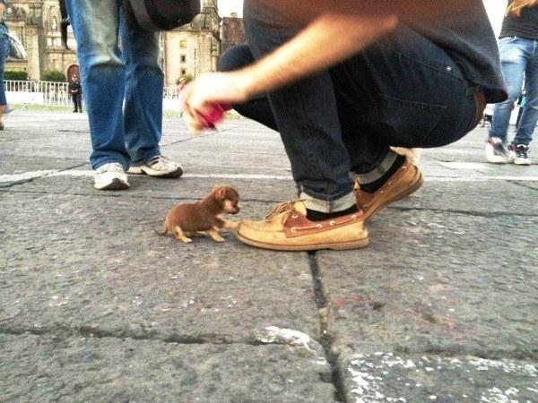 20 cachorros pequeños 5