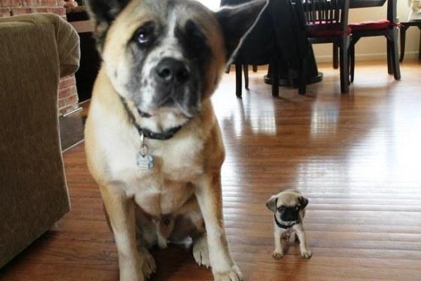 20 cachorros pequeños 66