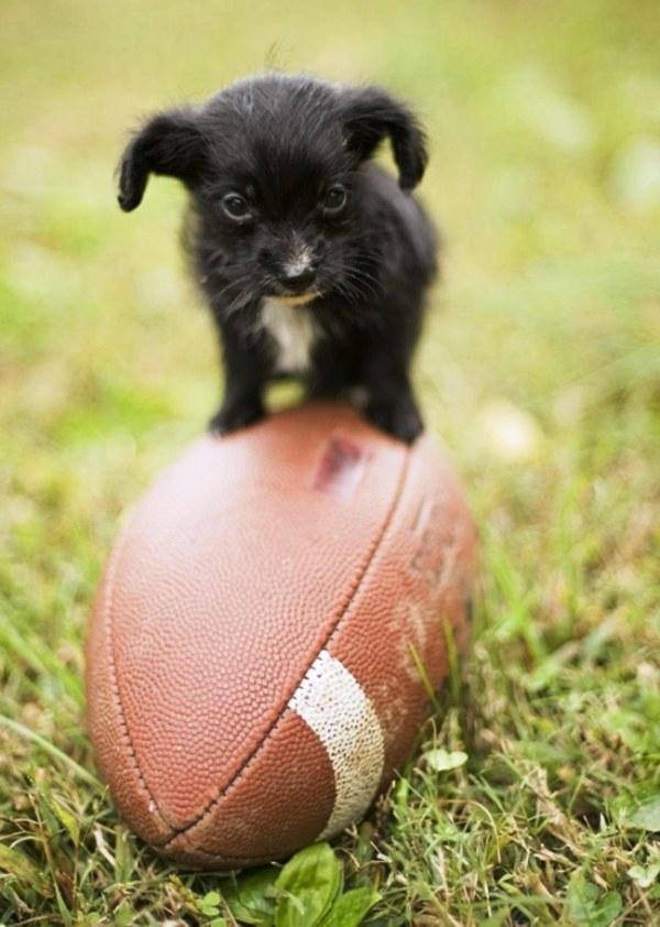 20 cachorros pequeños 9