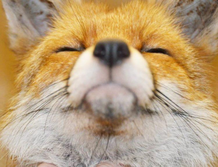 Afrodita Fox 4