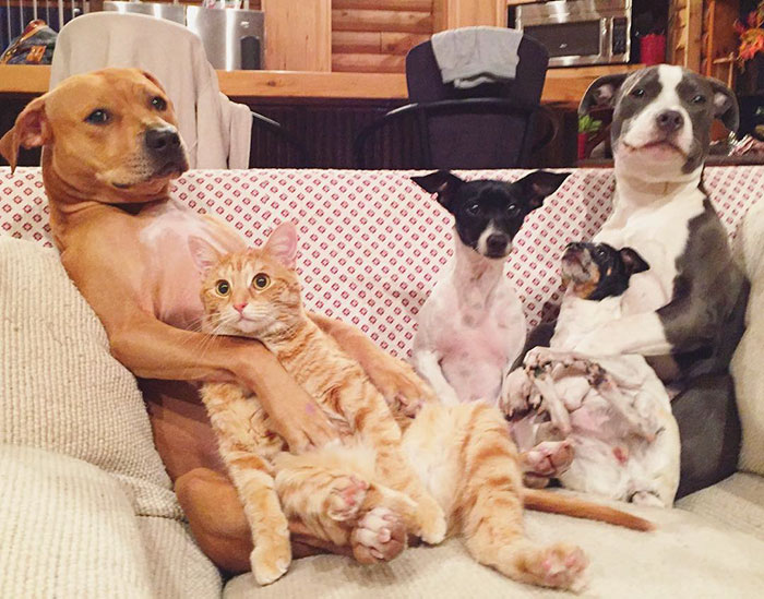 Amistad-gato-perro-patos 10