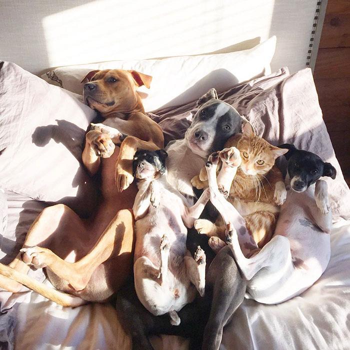 Amistad-gato-perro-patos 11
