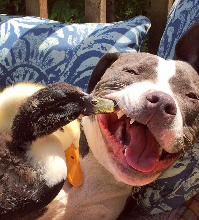 Amistad-gato-perro-patos 6