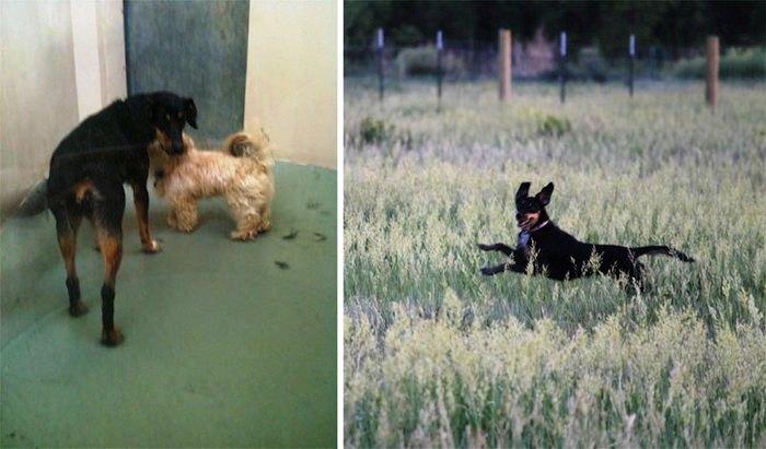 Antes y despues de la adopcion 13