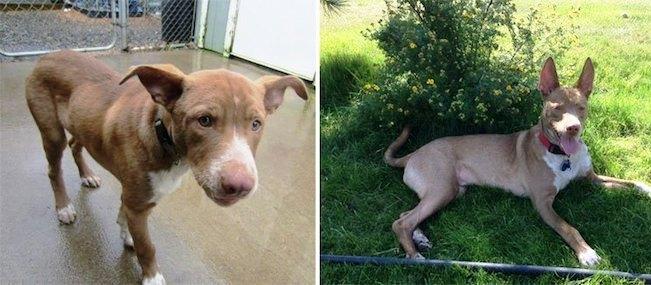 Antes y despues de la adopcion 14-1