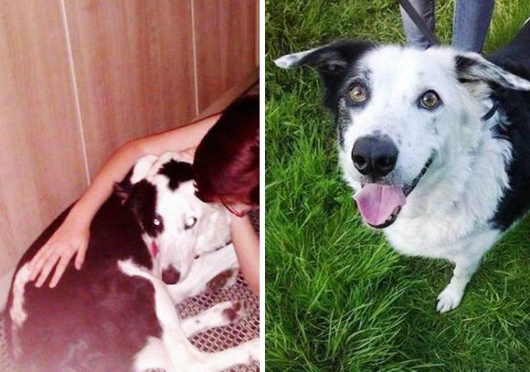 Antes y despues de la adopcion 15