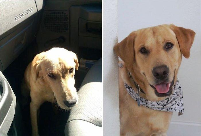 Antes y despues de la adopcion 18