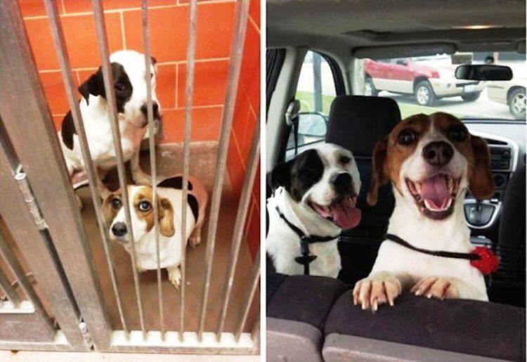 Antes y despues de la adopcion 2