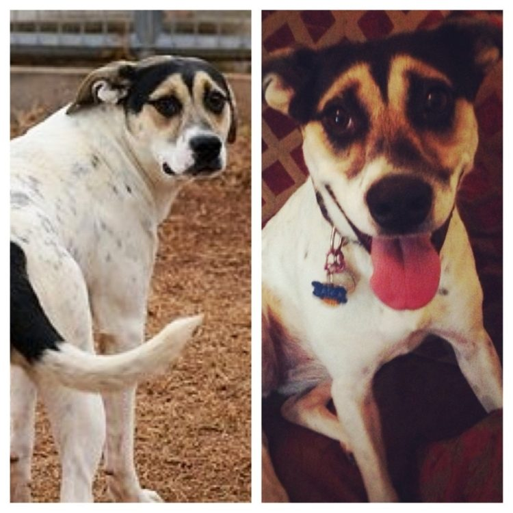 Antes y despues de la adopcion 24