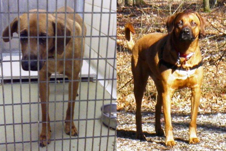 Antes y despues de la adopcion 25