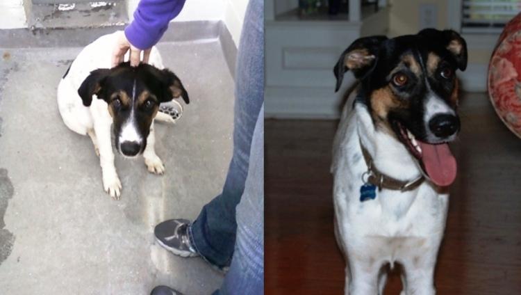 Antes y despues de la adopcion 27