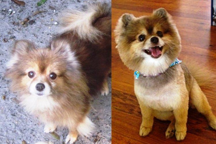 Antes y despues de la adopcion 28