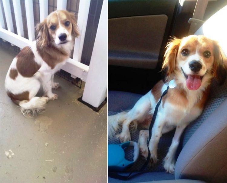 Antes y despues de la adopcion 3