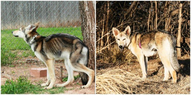 Antes y despues de la adopcion 31