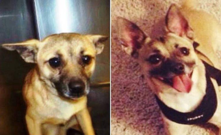 Antes y despues de la adopcion 32