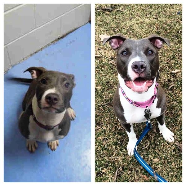 Antes y despues de la adopcion 39