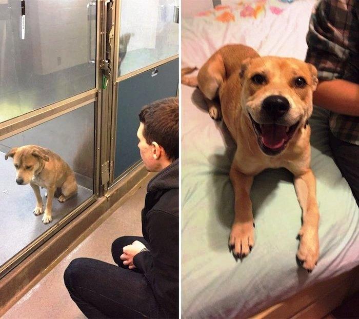 Antes y despues de la adopcion 4