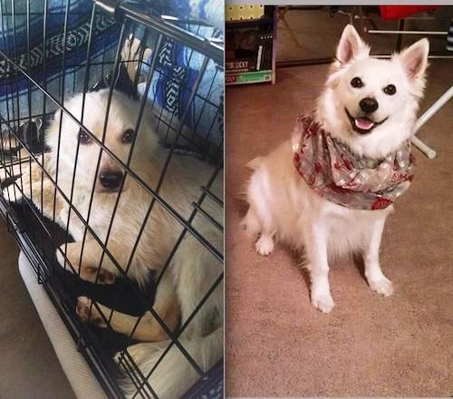 Antes y despues de la adopcion 49