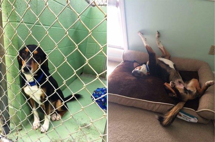 Antes y despues de la adopcion 5
