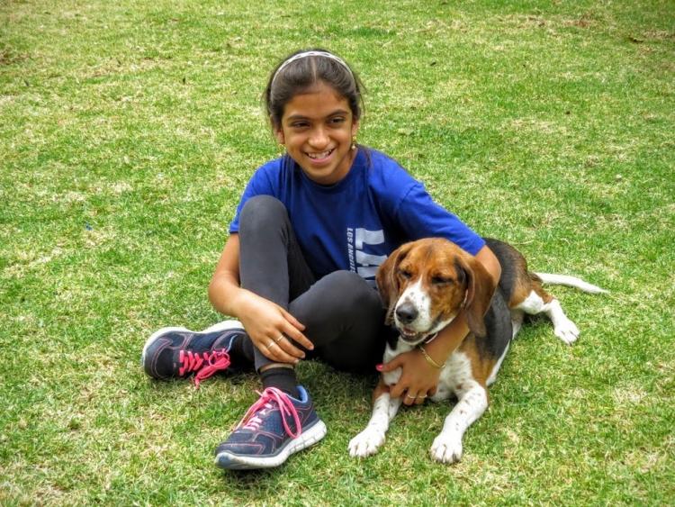 Beagle-gordo-viejo 13