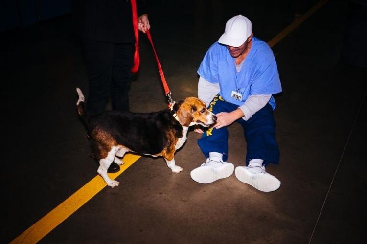 Beagle-gordo-viejo 7