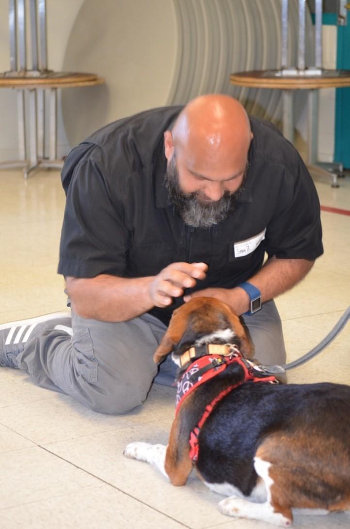 Beagle-gordo-viejo 8