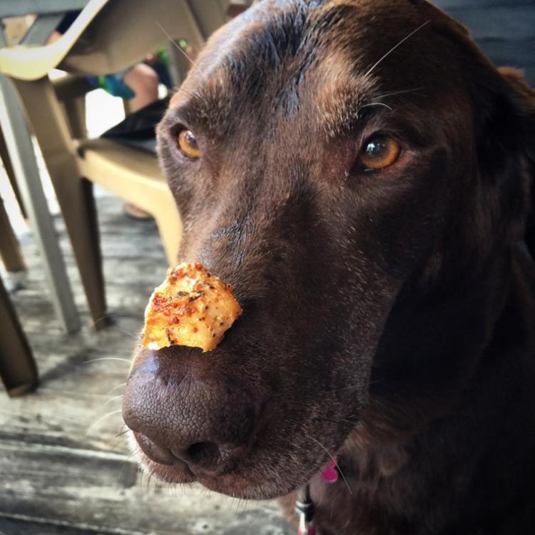 Bella-perra-cancer 1