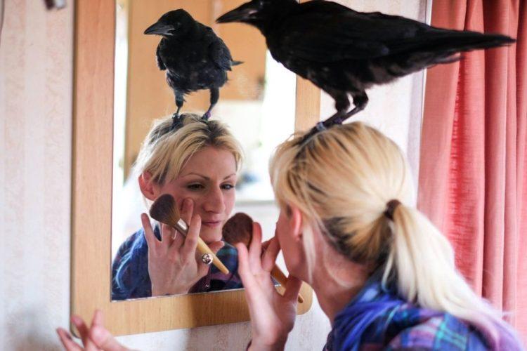 Crow no deja a mujer que lo salvó 1