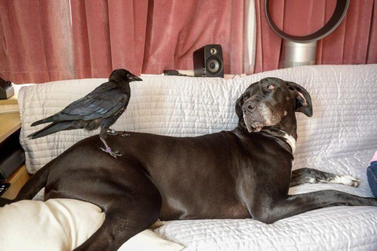 Crow no deja a mujer que lo salvó 2