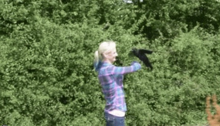 Crow no deja a mujer que lo salvó 6
