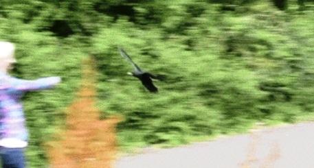 Crow no deja a mujer que lo salvó 7