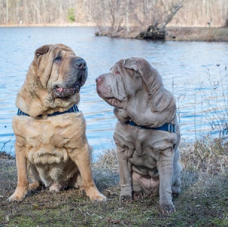 Dos perritos con vidas de tragedia distintas se conocen al ser adoptados 1