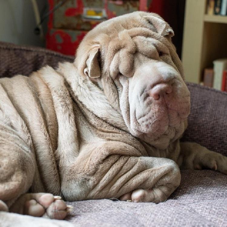 Dos perritos con vidas de tragedia distintas se conocen al ser adoptados 10