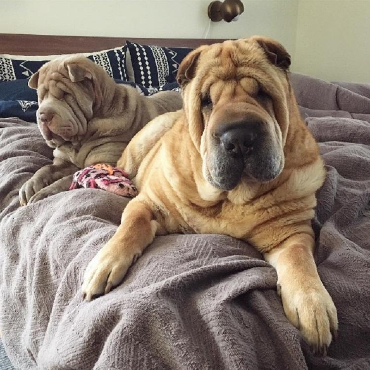 Dos perritos con vidas de tragedia distintas se conocen al ser adoptados 12