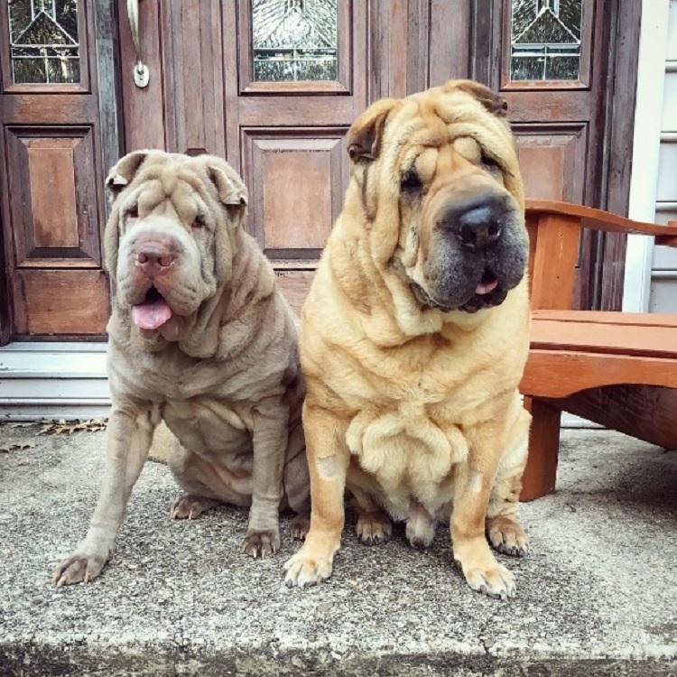 Dos perritos con vidas de tragedia distintas se conocen al ser adoptados 2