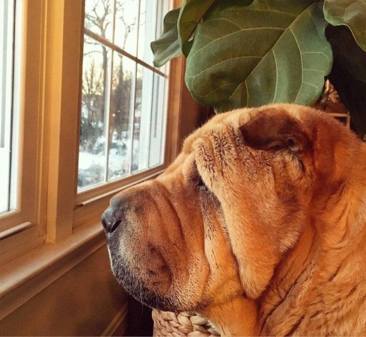 Dos perritos con vidas de tragedia distintas se conocen al ser adoptados 3