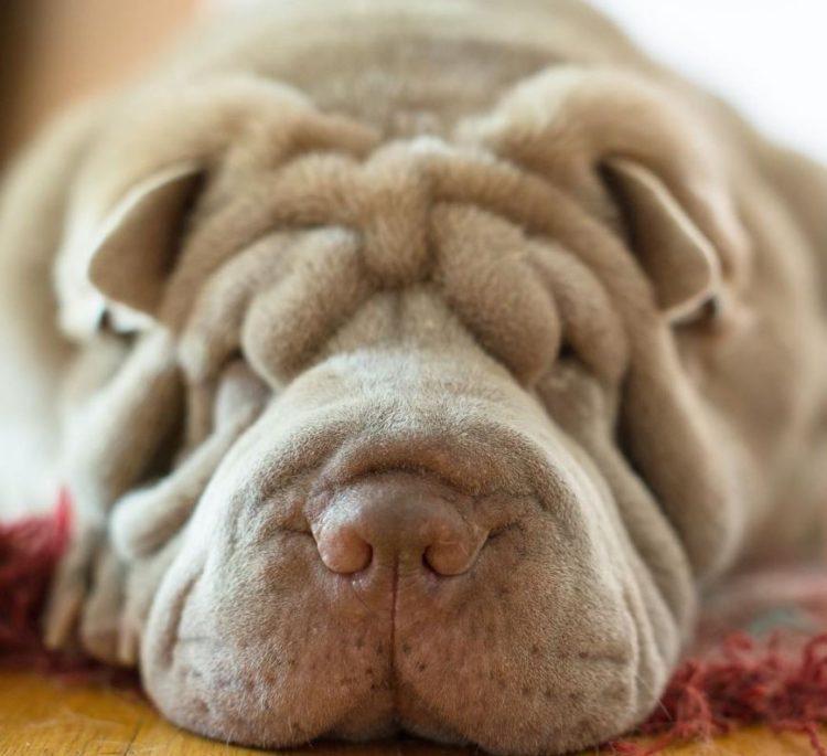 Dos perritos con vidas de tragedia distintas se conocen al ser adoptados 4