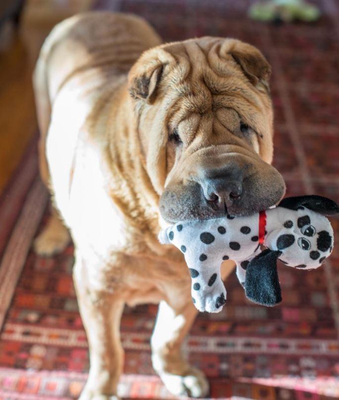 Dos perritos con vidas de tragedia distintas se conocen al ser adoptados 9