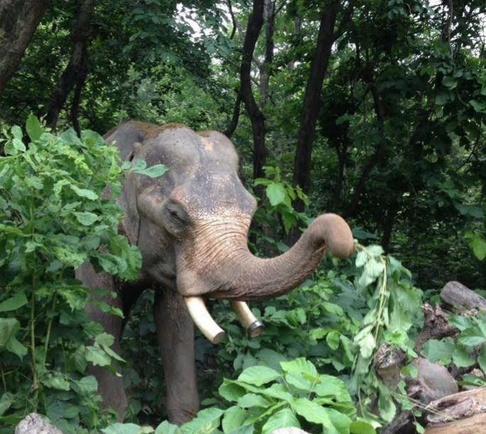 Elefante-con-menos-suerte-del-mundo 3