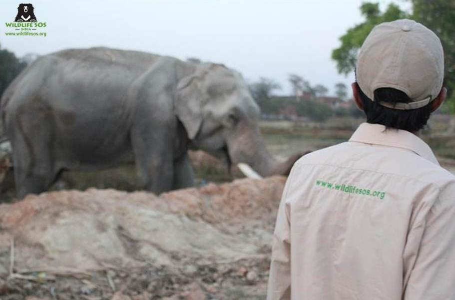 Elefante-con-menos-suerte-del-mundo 4