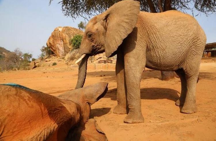 Elefante-envenenado 3