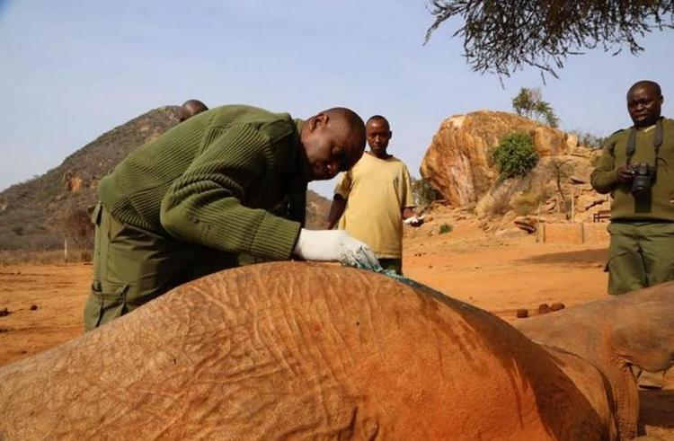 Elefante-envenenado 4