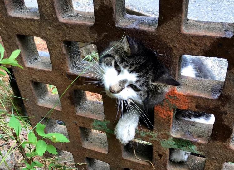 Gato-curioso-atorado 3