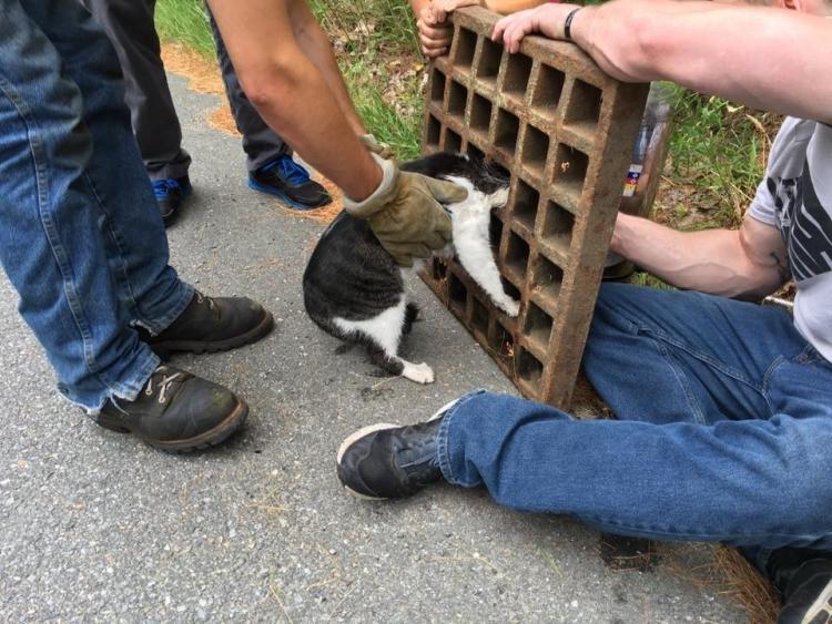 Gato-curioso-atorado 4