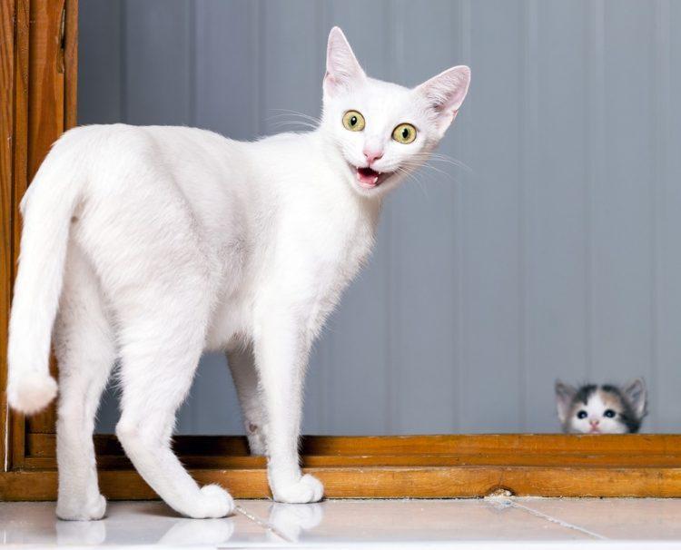 Introducir a los gatos 4