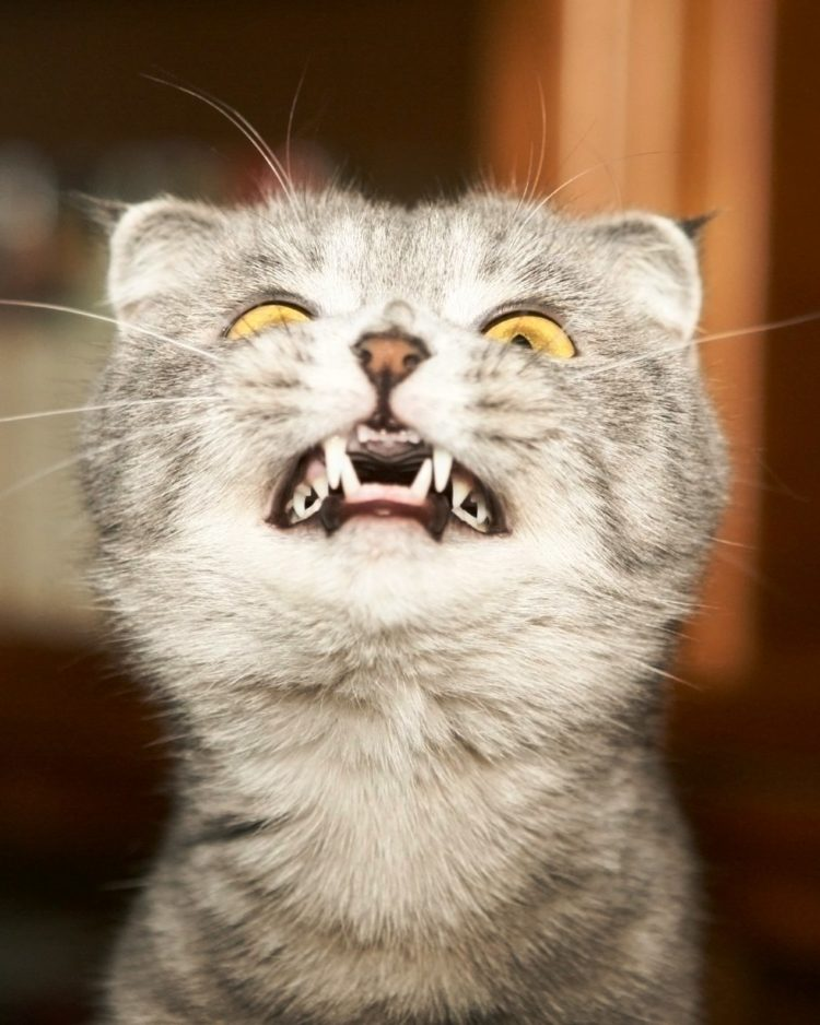 Introducir a los gatos 5
